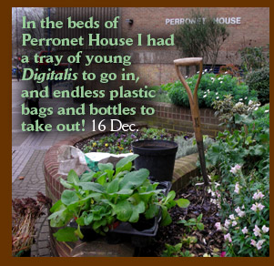 In the beds of Perronet House I had a tray of young Digitalis to go in, and endless plastic bags and bottles to take out! 16 Dec.