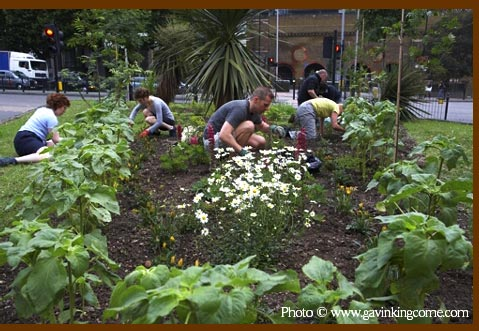 Guerrilla gardening at Stamford St London