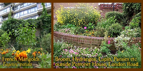 The blooming guerrilla gardens of Perronet House in late June 2007