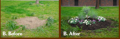 Before and after guerilla gardening two new patches in Southwark London