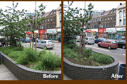Before and after guerrilla gardening on Brixton Road. Just wait for it to start flowering!