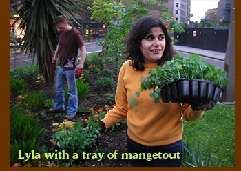Lyla with a tray of mangetout