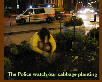 The police watch the planting of Hispi cabbage