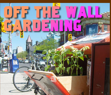 Off The Wall guerilla gardening