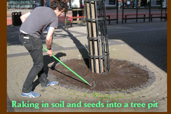 Raking in soil and seeds into a tree pit