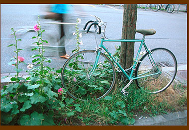 A bike and hollyhock share a treepit