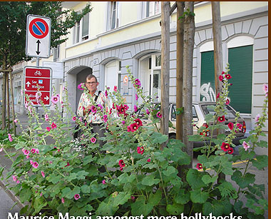 Maurice Maggi amongst more hollyhocks