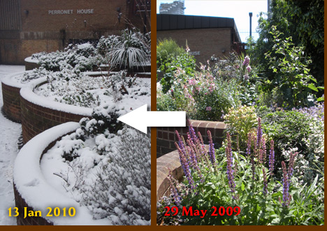 Perronet House shrubbery 29 May 2010 to 13 Jan 2010