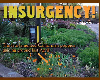 Insurgency! The late lamented Californian poppies gaining ground last April