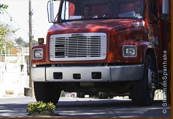 A truck poised to pass over Shannon Spanhake's pothole guerrilla garden