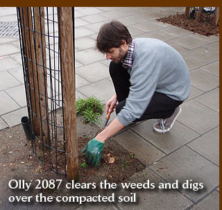 Olly 2087 clears the weeds and digs over the compacted soil