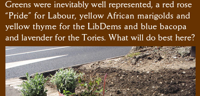 "Greens were inevitably well represented, a red rose ""Pride"" for Labour, yellow African marigolds and  yellow thyme for the LibDems and blue bacopa and lavender for the Tories. What will do best here?"