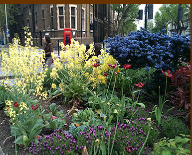 Westminster Bridge Road guerrilla garden