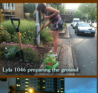Lyla 1046 preparing the ground
