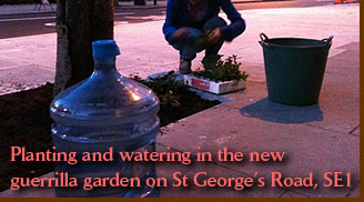 Planting and watering in the new guerrilla garden on St George's Road, SE1