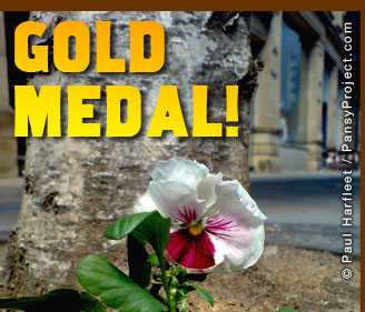 RHS Gold Medal for a guerrilla gardener