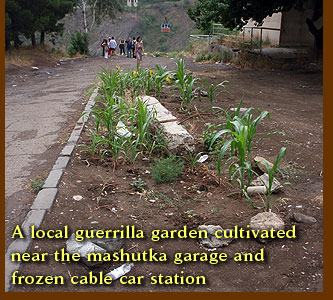 A local guerrilla garden cultivated near the mashutka garage and frozen cable car station