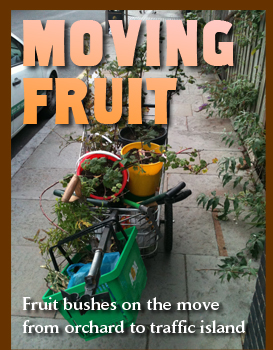 Fruit bushes on the move from orchard to traffic island