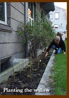 Guerrilla gardening with willow