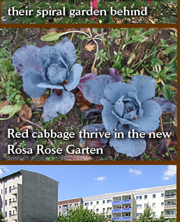 Spiral garden at the new Rosa Rose garden, and red cabbage