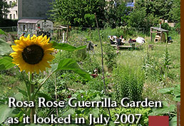 Rosa Rose Guerrilla Garden as it looked in July 2007