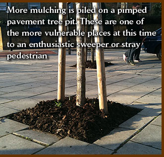 More mulching is piled on a pimped pavement tree pit. These are one of the more vulnerable places at this time to an enthusiastic sweeper or stray pedestrian