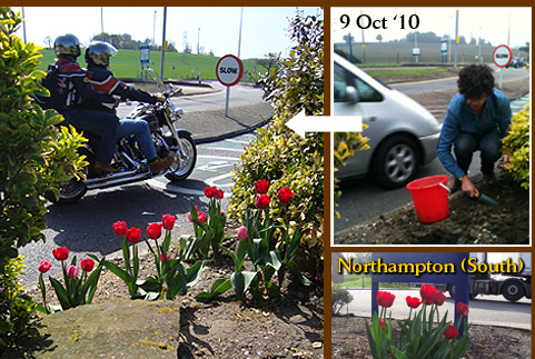 Guerrilla gardening at Motorway service stations up the M1