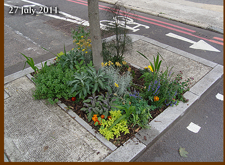 Urban Guerrilla Physic Garden 27 July 2011