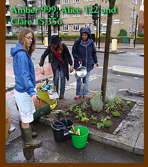 Amber 999, Alice 122 and Clare 15,356 guerrilla gardening