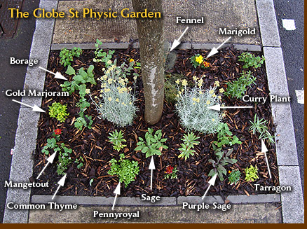 The Globe St Physic Garden