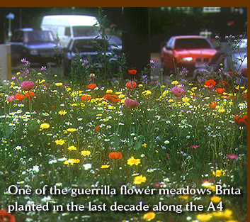 One of the guerrilla flower meadows Brita planted in the last decade along the A4