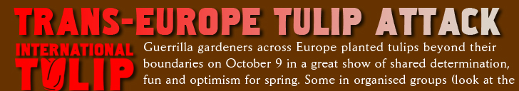 Trans Europe Tulip Attack Guerrilla gardeners across Europe planted tulips beyond their  boundaries on October 9 in a great show of shared determination, fun and optimism for spring. Some in organised groups (look at the
