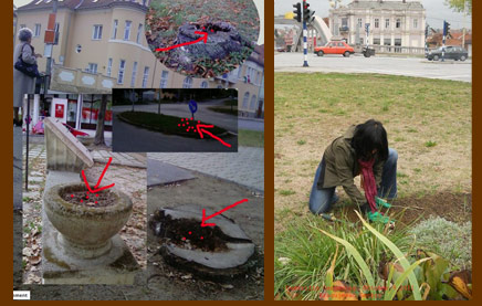 Guerrilla Gardening in Hungary and Serbia