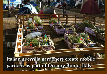 Italian guerrilla gardeners create mobile gardens as part of Occupy Rome, Italy
