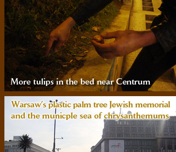 Warsaw's plastic palm tree Jewish memorial and the municple sea of chrysanthemums
