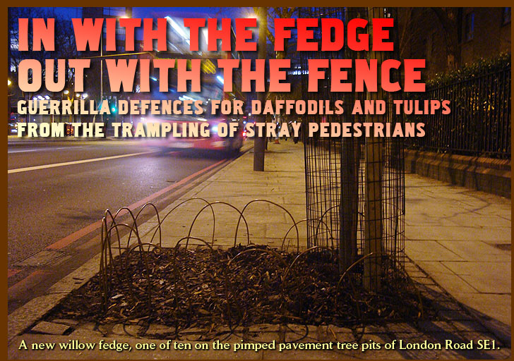 In with the fedge, out with the fence. Guerrilla defences for daffodils and tulips from the trampling of stray pedestrians