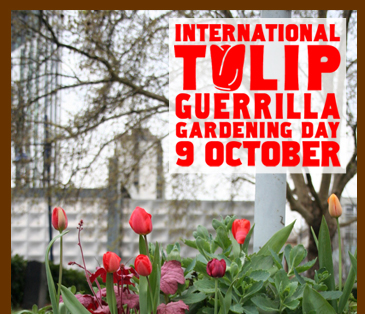 International Tulip Guerrilla Gardening Day 9 October