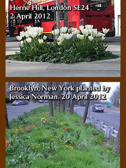 Brooklyn New York guerrilla gardening