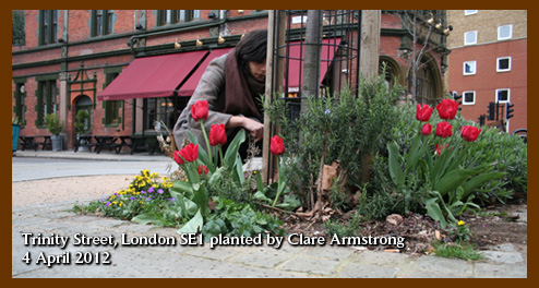 Trinity Street London SE1 guerrilla gardening Clare Armstrong 4 April 2012