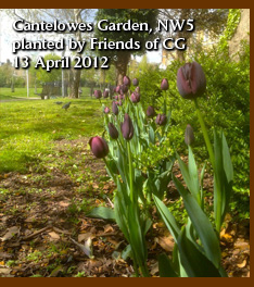 Cantelowes Garden NW5, planted by friends of CG 13 April 2012