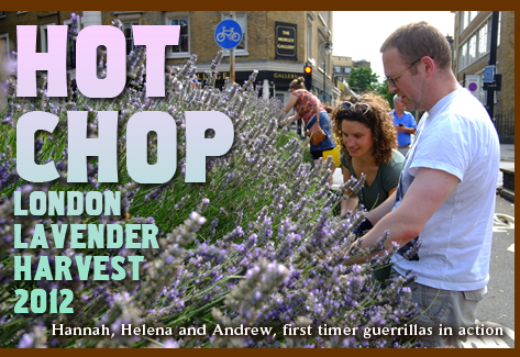 Hot Chop London Lavender Harvest 2012 guerrilla gardening