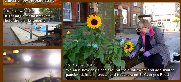 15 October 2012 We raise Beverley's bed around the sunflowers and add winter pansies, daffodils, crocus and heuchera on St George's Road