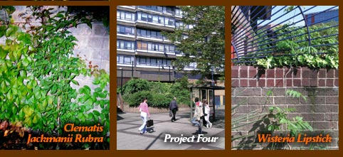 Guerrilla Gardening at Perronet House, Elephant & Castle