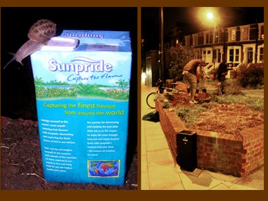 Project Sixteen: Amhurst Road, Hackney, London. Guerrilla Gardening: Tuesday 10 October.