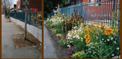 Luc Forest the guerrilla gardener in Montreal, Canada